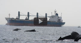whales and ships