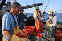 """Fisheries Survey in """"Ocean Frontiers II"""""""